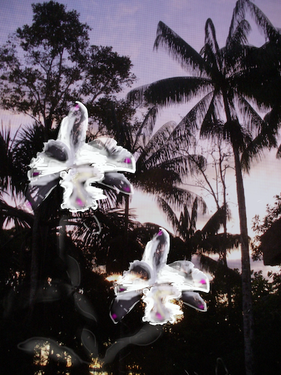 Orchid/Palms