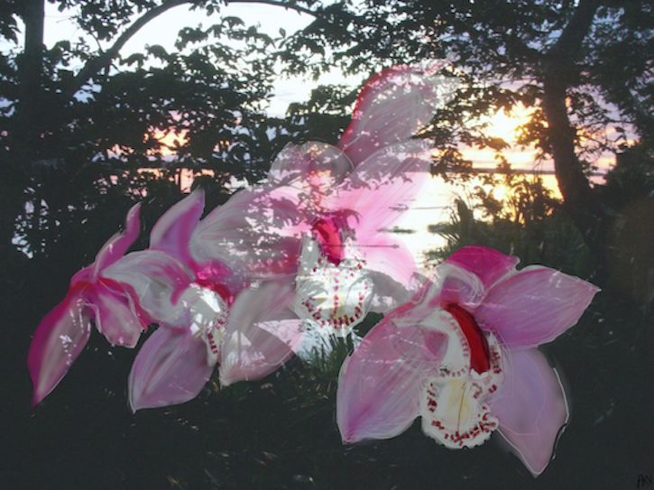 Orchid/Amazon II