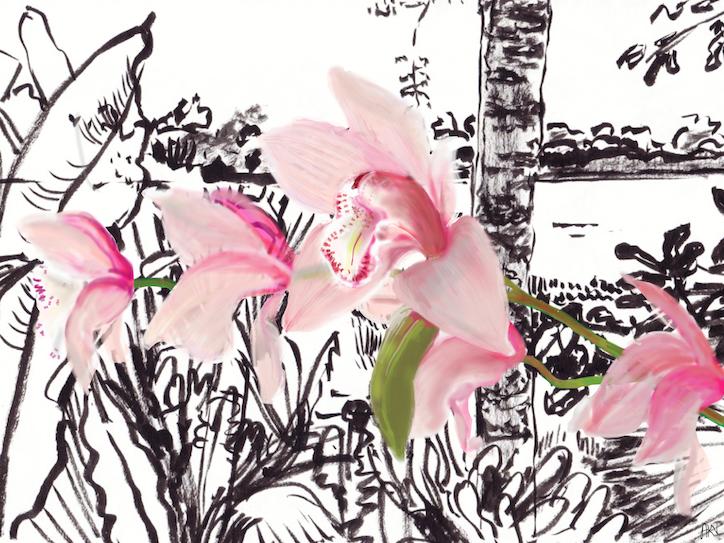 Orchid/Amazon IV