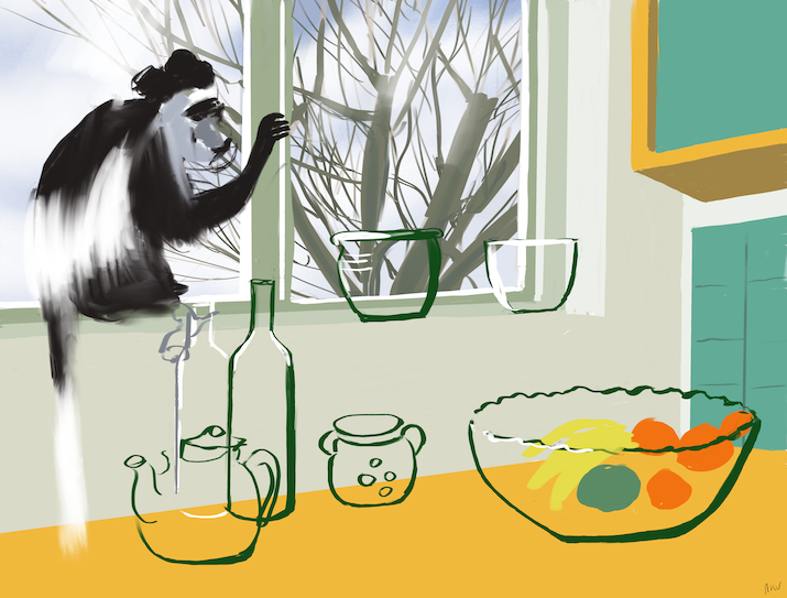 Colobus In the Kitchen